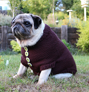 Knitting Pattern Dog Coat Pug : Ravelry: Pug Dog Sweater pattern by Angelcatkins (Elizabeth Watkins) Designs