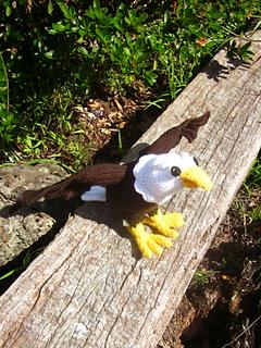 Eagle1_small2