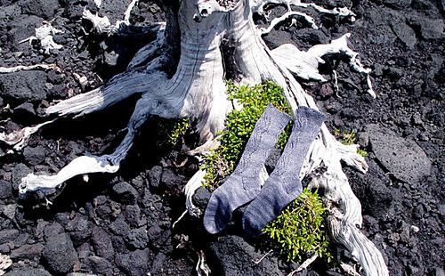 Socks-with-tree-on-lava-rav_medium
