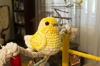 Yellow_baby_budgie__1280x853_small2
