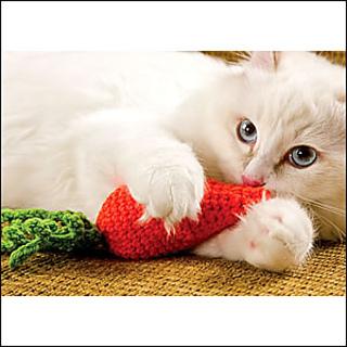 Kittys_carrot_300_small2
