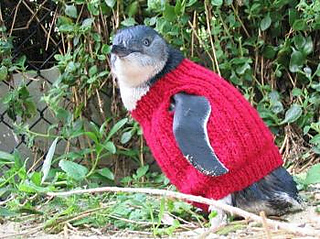 Resizedimage350261-knitted-jumper-lores_2_small2