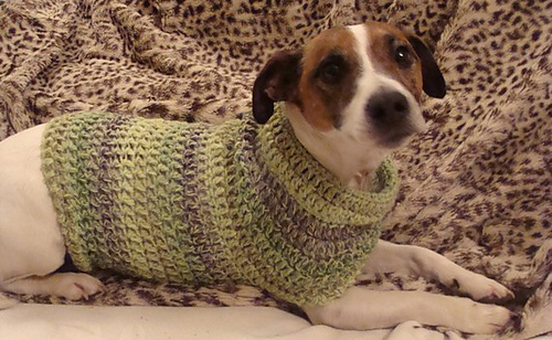 Ravelry Jack Russell Dog Jumper Pattern By Marie Riddle