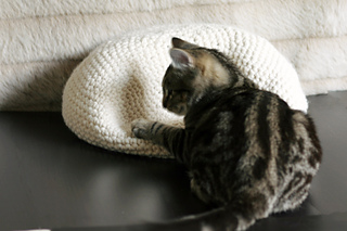 Cat_oven_6_small2