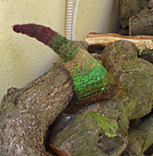 Tentacle-in-woodpile_small2