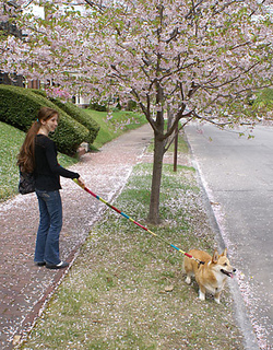 Leash3_small2