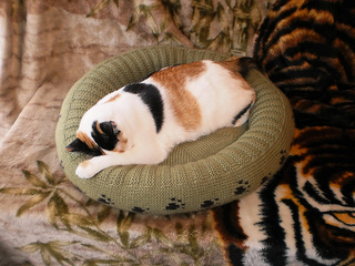 Dog_cat_bed_shiri_designs_02_11_arial_small2
