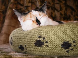 Dog_cat_bed_shiri_designs_02_11_eyebrows_small2