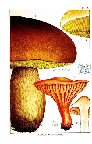 Botanical-mushroom-edible-and-poisonous-mushrooms-edible-buff-cap_medium
