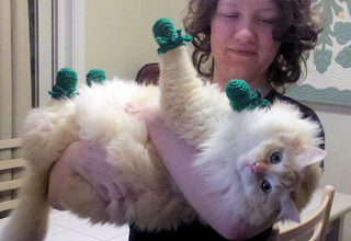 Kitten_mittons__finnegan_small2