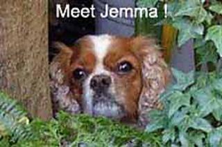 Jemmadog_small2