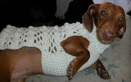 Dog_sweater_and_girls_shrug_010_medium