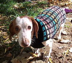 Ravelry: Crochet Dachshund or Small Dog Sweater pattern by ...