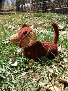 Brown_doxie_006_small2