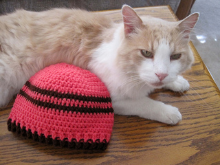 Andrew_and_cat_and_hat_beanie_on_table_small2