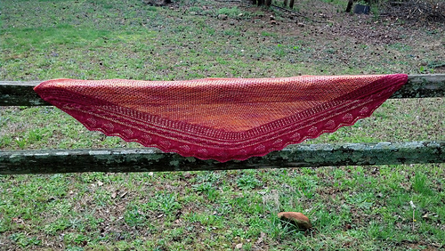 Orange_wingspan_medium