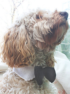 Knit-dog-bow-tie_small2