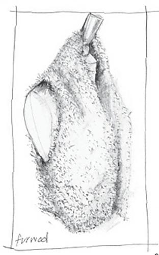 Fur-gilet_medium