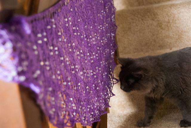 © happygoducky (and bonus cat!)