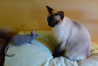 Rat_small2