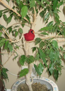 Cardinal_in_tree_crop2_small2