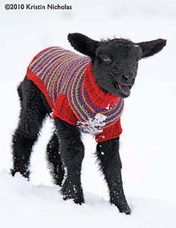 Black_lamb_postcard_front_small_small2