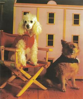 Patons__323__bazaar_book_dog_coats_small2
