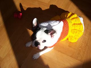 Ravelry Xs Candy Corn Dog Costume Pattern By Manda Proell