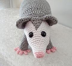 Opossum3_small