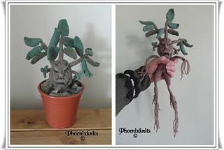 Mandrake_pair_small2