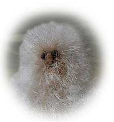 Yeti_edges_softened_medium2_small