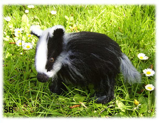 Bonnie_baby_badger_small2