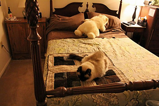 Bed022013-500x333_small2