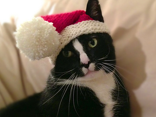 Santa-claws-6_small2