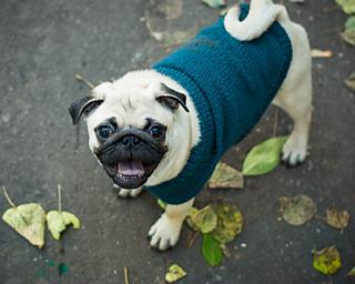 Ravelry: Pug Dog Sweater pattern by Angelcatkins ...