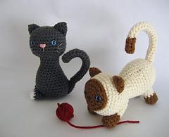 Kitten_small