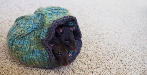Rats_7_copy_medium