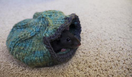 Rats_4_medium