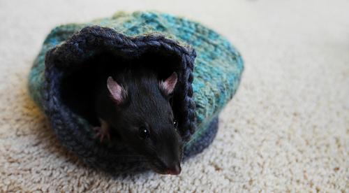 Rats_8_medium