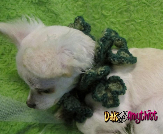 Ravelry Shamrock Spring Dog Collar Cowl Crochet Pattern Pattern By