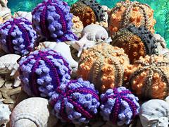 Sea-urchin-farm_small