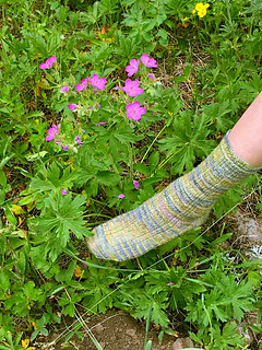 Hot-springs-sock-with-purple-flowers_small2
