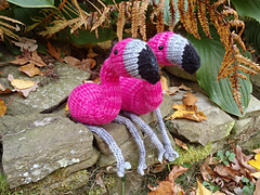 Stanascrittersetc_flynn__the_flamingo_3_small