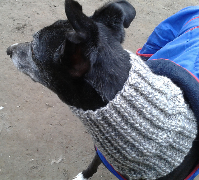 Ravelry Dog Snood Or Neck Warmer Pattern By Jacqueline Gibb