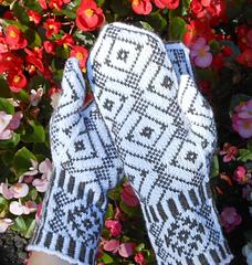 Winter_dream_palm_shot_101516_small
