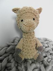 Alpaca1_small