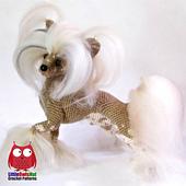 Wm_ravelry_105_chinees_dog_crochet_pattern_by_chirkova_for_littleowlshut_small_best_fit