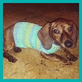 Ravelry Xs Dog Sweater Pattern By Stitch11