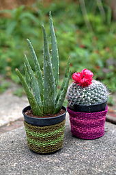 F581_web_cleo_plant_cozies_small_best_fit