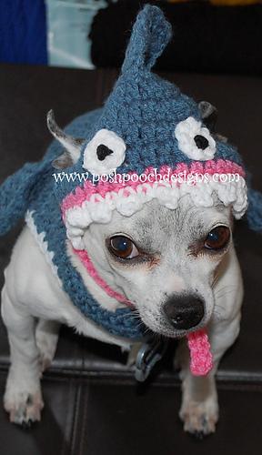 Ravelry Shark Dog Hat Small Dog Hat Pattern By Sara Sach